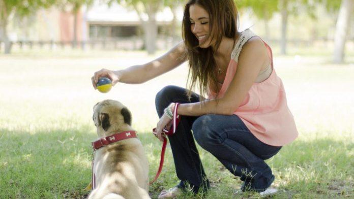 El gobierno español quiere generalizar la tenencia responsable de mascotas