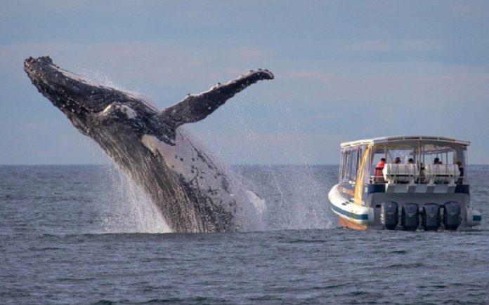 exhibición ballena