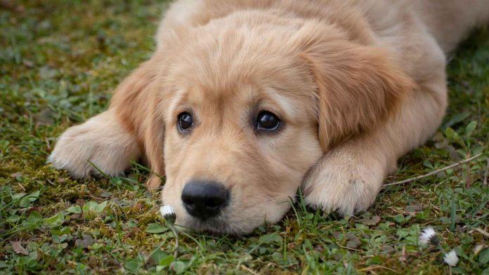 Las personas que quiera una mascota podrán agendar una cita.