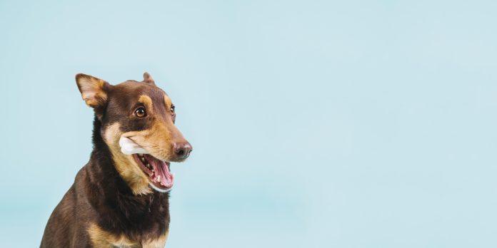 A la primera señal de problemas con su mascota debe llevarla al veterinario.